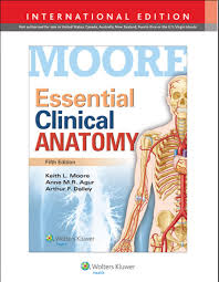 Anatomy Of Human Body Pdf Essential Clinical Anatomy 5th Edition Pdf Moore Keith L