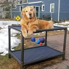 Pvc Pipe Dog Bed Caught Watching Tv Again Kuranda Bunk Dogs Pinterest Dog