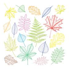 large set of multi colored leaves of different trees drawing