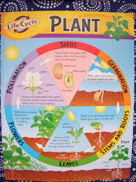 worksheets and resources 2nd grade plants