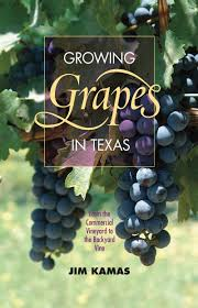 How To Grow Grapes In Your Backyard by Growing Grapes In Texas Jim Kamas Central Texas Gardener Youtube