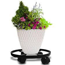 large indoor plants amazon com