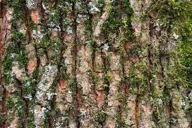where can moss grow wonderopolis