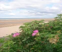chambre d hote calvados bord de mer au coeur d omaha belles plages de normandie à laurent sur mer