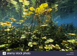 Massachusetts Vegetaion images Underwater vegetation stock photos underwater vegetation stock jpg