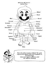 anatomy coloring pages free glum