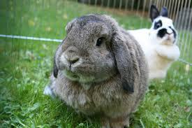 facts rabbits