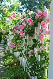 pics of gardens 158 best cottage gardens images on pinterest cottage gardens