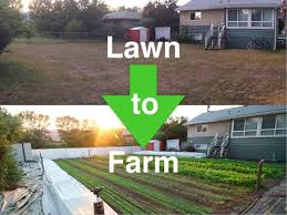 how i convert lawns into profitable urban farms youtube