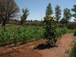native plants in the desert desert vegetables and flowers u2013 growing non drought tolerant