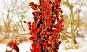 native american medicinal plants medicinal plant profiles u2013 deer nation herbs