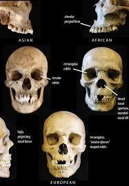 Floor Of The Cranium Cranial Features And Race John Hawks Weblog