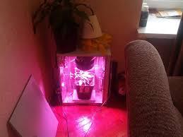 growing autoflower with led lights stealth led 50w 1x big devil auto grow lst the autoflower