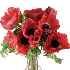 Bulk Flowers Online 7 Best Shanna U0026 Jeff Images On Pinterest Flower Power Flower