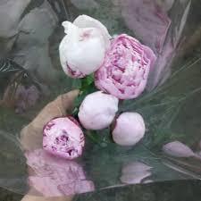 bulk peonies bulk discount flowers buying peonies for weddings