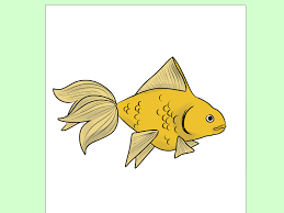how to draw a bass 5 steps with pictures wikihow