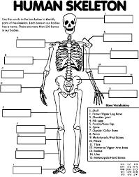 Anatomy And Physiology Labeling Skeleton Labeling Sheet Sheet
