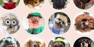 Halloween Costumes Cats Wear 29 Dog Costumes Halloween 2017 Cute Halloween Costumes