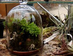 indoor gardening idea tabletop terrariums networx