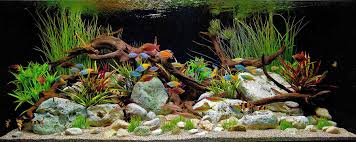 Aquascape Fish First Tropical Fish Aquarium Tropical Fish Keeping