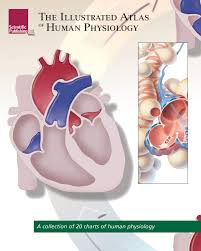 Anatomy And Physiology Of Copd The Illustrated Atlas Of Human Physiology U2013 Scientific Publishing