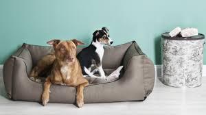 materasso per cani divano per cani di taglia grande relax per fido dalani e ora