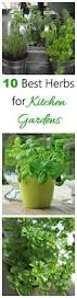 herbs for kitchen gardens my top 10 picks the gardening cook