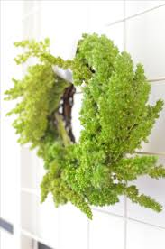 Fern Decor by 265 Best Diy Home U0026 Decor Images On Pinterest Allen Smith
