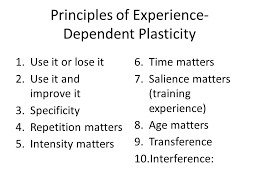 experience dependent brain growth ptp 512 neuroscience in physical therapy neuroplasticity ppt