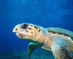 wallpapers spongebob swim in the sea otter animal cute free