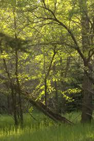 stbarbebaker u2013 richard st barbe baker afforestation area