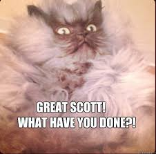 What Have You Done Meme - great scott what have you done shocked cat quickmeme