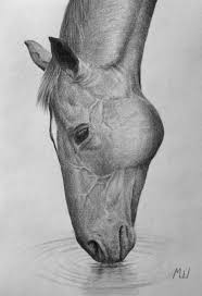 pencil drawing of a horse drinking water by miroslav sunjkic