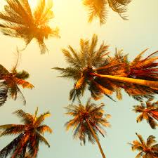 palm sprouted from 2000 year old seed now bears fruit in israel