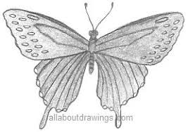 pencil drawings pencil drawings butterflies
