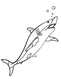 73 shark coloring pages images sharks shark