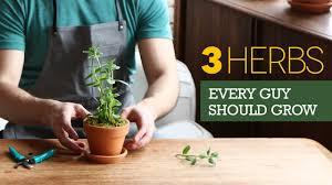 the 3 herbs every man should grow on his windowsill youtube