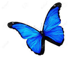 blue butterfly on white background stock photo picture and