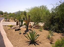interior desert landscaping ideas for front yard downstairs