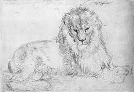 looking at a lion for the first time visualoop