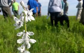 kansas native plant society connect