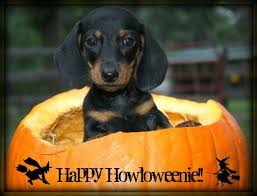 Halloween Costumes Miniature Dachshunds 136 Doxie Holidays Images Animals Dachshunds