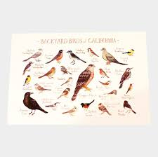 California Birds images Backyard birds of california postcard jpg