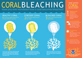 healthy colors what is coral bleaching