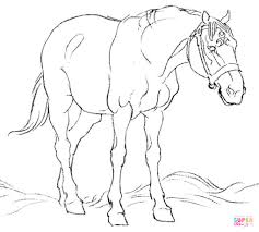 horse in field coloring page free printable coloring pages