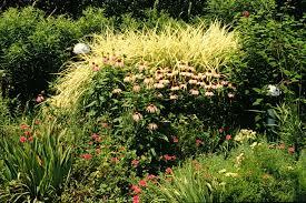 decor heavy metal ornamental grass with california ornamental