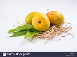 Mango King king of fruits alphonso yellow mango fruit duo with stems and green