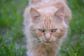 free images grass view kitten fauna nose whiskers