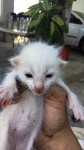 3 newborn kittens adopt 3 newborn kittens in rincon pr today
