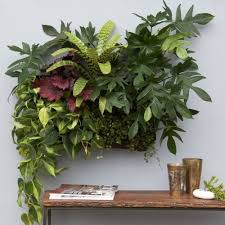 Wall Planters Indoor by Amazon Com Living Wall Planter Indoor Outdoor Use W Reservoir